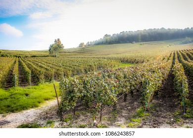 View of vineyards from Champagne area in France