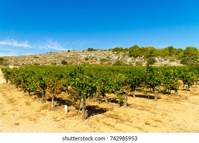 View of vineyards in the countryside from the small French town of Gruissan in the south of France