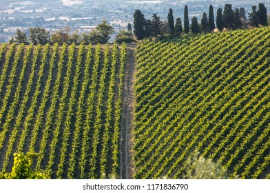 view of vineyards and farms on rolling hills of Abruzzo. Italy