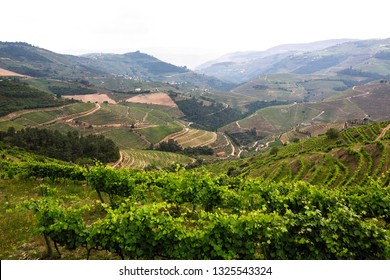 View of vineyards are on a hills in Douro Valley - Nord Portugal.