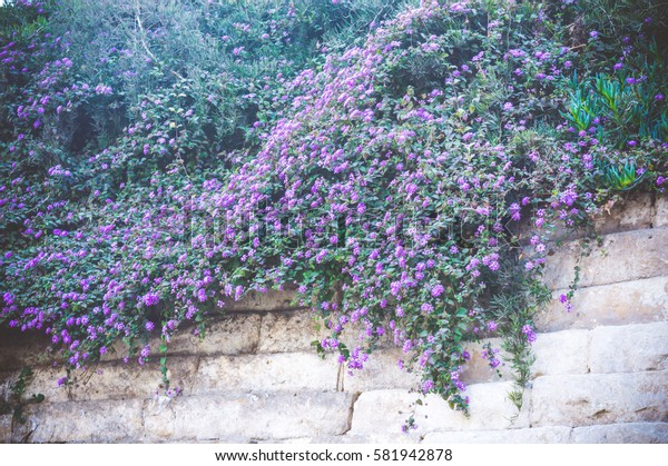 view of violet flowers with green leaves