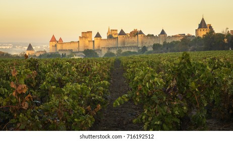 View of the walls and towers of Carcassonne from a nearby vineyard. Languedoc. France