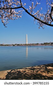 A view of the Washington Monument across the Tidal Basin with cherry blossom trees in the foreground
