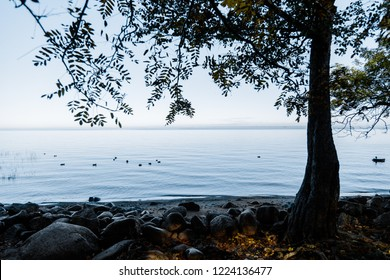 view of the water through the trees