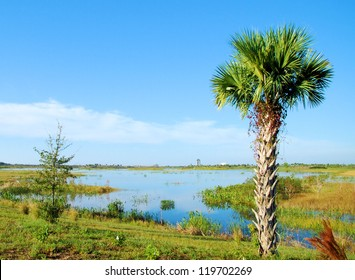 View of Wellington Marsh in Florida / The Cabbage Palm