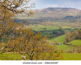 View of the Welsh countryside from the new precipice walk in Snowdonia, north Wales. Tree branches, rolling hills on a sunny day.