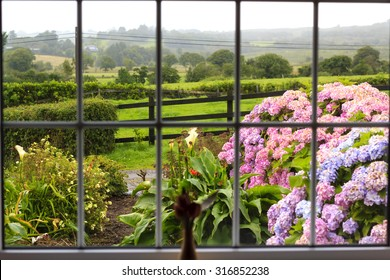 View at the wet morning garden from inside through the large window. Further flowered garden there is a green Irish countryside.