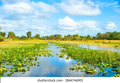 View of wetland areas in the Central Florida. Wetlands and swamps are vitally important ecosystem for supporting a huge diversity of plants and animals.
