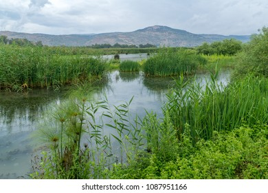 View of wetland and the Galilee mountains in the Hula Nature Reserve, northern Israel