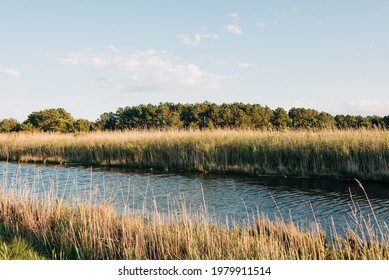 View of wetlands from the Wildlife Loop, at Chincoteage Island, Virginia