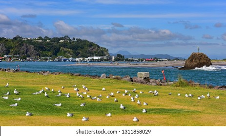 View of Whakatane River and town at Bay of Plenty, New Zealand