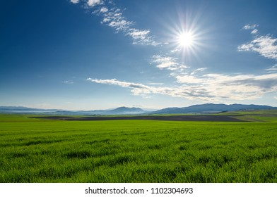 A view of wheat field; scenic view; Agricultural concept.
