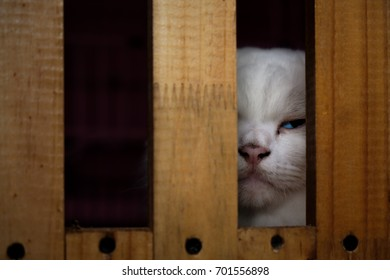 View of white cat with blue eye in wooden cage. Soft focus.