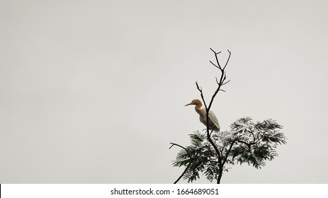 the view of a white heron perched above a tree