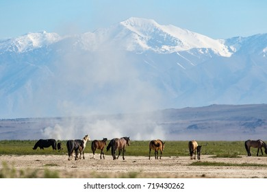View wild horses with snow covered mountains