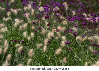View of wild plant and lilac flower on the summer meadow. Macro photography of nature.