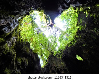 A view in Wilson stump looks like heart shape in yakushima japan
