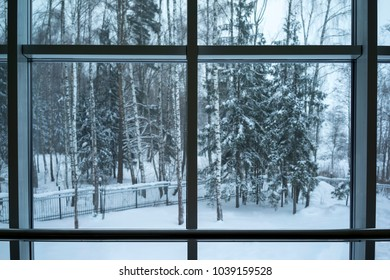 View from the window of the snowy forest.