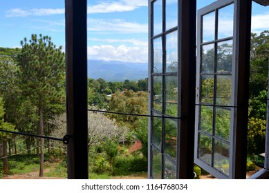 view from the window of a tea plant on the mountains, sri lanka