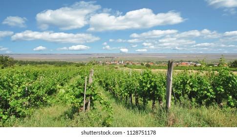 View to Wine Village of Moerbisch am See,Neusiedlersee,Burgenland,Austria