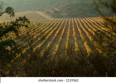 view of a wineyard on autumm
