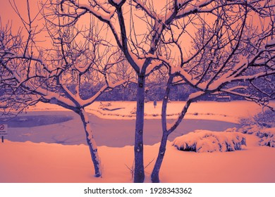 The view of the winter falling snow in the sunset