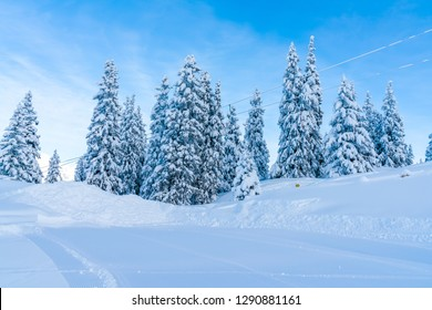 View of winter landscape with snow covered trees in Seefeld in the Austrian state of Tyrol. Winter in Austria