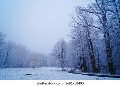 View of a winter snowy forest with trees covered with white fluffy snow on a frosty sunny day