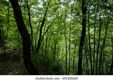 A view of a wood with very intense green foliage