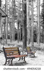A view of the wooden bench in the forest , korea / the wooden bench in the forest