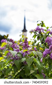 view of a wooden church among the lilac flowers