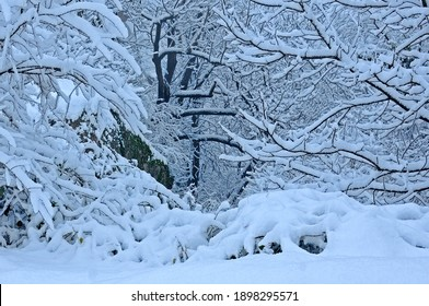 View of the woods with snow-covered twigs and branches in Bulgaria