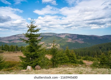 View from the Wurmberg to the Harz National Park. In the background is the summit of Brocken.