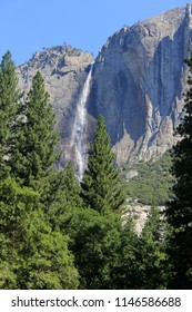 A view of Yosemite Falls from the valley in Yosemite National Park