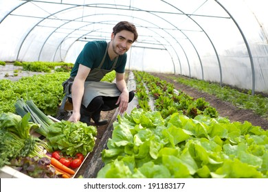 View of a Young attractive farmer harvesting vegetables