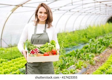 View of a Young attractive woman collecting vegetable in a greenhouse