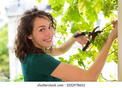 View of a Young woman harvesting grape on a vine on her citygarden balcony - Fruit and nature theme