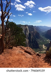 View of Zion Canyon from Observation Point with tree in foreground