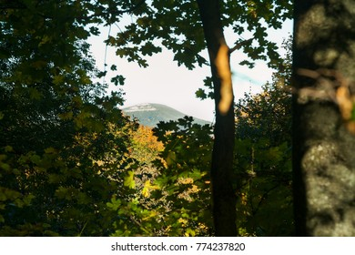 Viewing mountain top from forest with selective focus