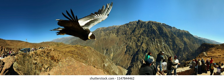 Viewpoint of the Condor in the Colca Valley, August 2014 Arequipa, Peru