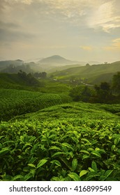 Viewpoint on the top of cameron highland, tea valley and sunrise in Malaysia.