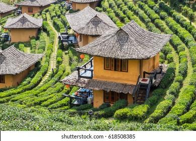 Viewpoint resort earth house in tea plantation at lee wine ban rak thai,mae hong son,thailand