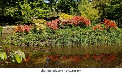 WOJSŁAWICE,DOLNOŚLĄSKIE,POLAND views in the arboretum of a botanical garden