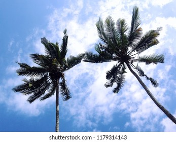 Views Of Coconut Trees The Sky And Clouds In The Dry Season, Banjar Kuwum, Ringdikit Village, North Bali, Indonesia