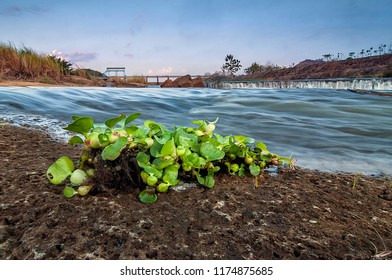 views of dams and freshwater plants