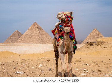 Views of the Great Pyramids in Egypt