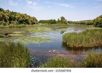 Views of Hungarian nature reserve Kis Balaton (Little Balaton)
