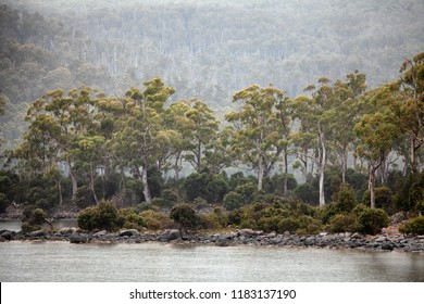 Views of Lake St Clair and native forest along the banks, seen in rain and fog. Lake St Clair is a natural freshwater lake located in the Central Highlands area of Tasmania, Australia.