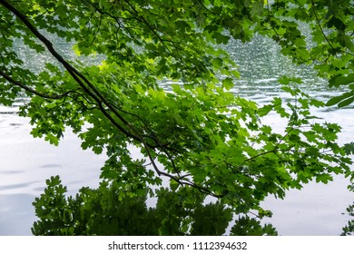 Views of the lake through lush green at Lake Schlachtensee in Berlin-Zehlendorf, Germany.