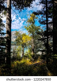 The views from Leigh Lake Trail in Grand Teton NP in Wyoming, are spectacular. The foreground trees envelope the view of the lake and the Tetons in the background. Autumn colors are starting to emerge